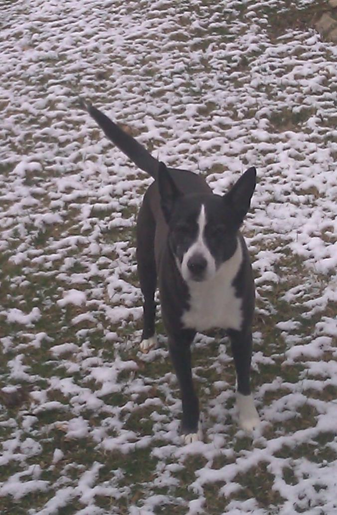 Click image for larger version.  Name:My Awesome dog!!!.jpg Views:463 Size:122.3 KB ID:10112