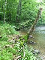 Click image for larger version.  Name:Pt Mtn root wad.jpg Views:185 Size:142.8 KB ID:11803