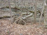 Click image for larger version.  Name:Bushkill tree root wad resized.jpg Views:314 Size:222.6 KB ID:11778